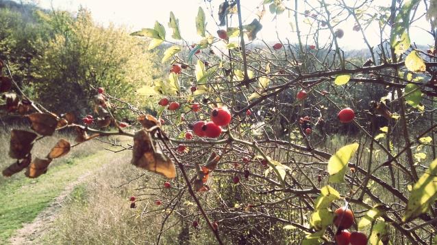 Autumn walk – 22 Oct '13