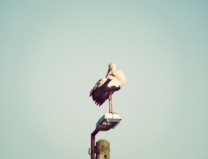 storks and pensive moods