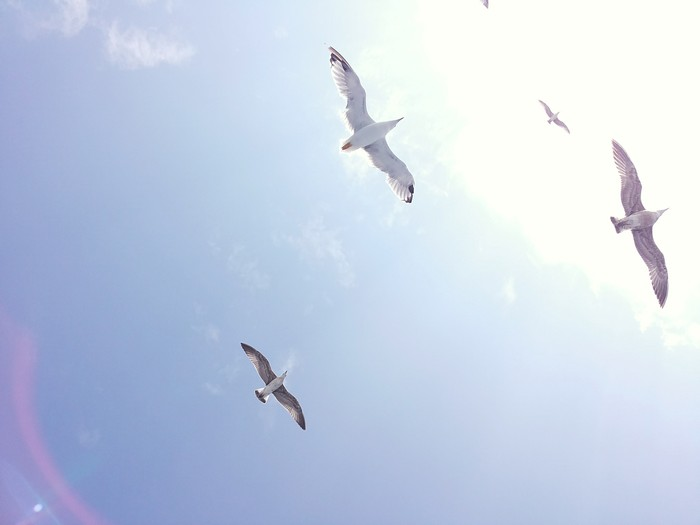 sunlight and gulls