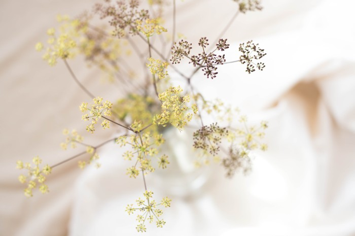 fine umbellifer flowers in a vase seen from above