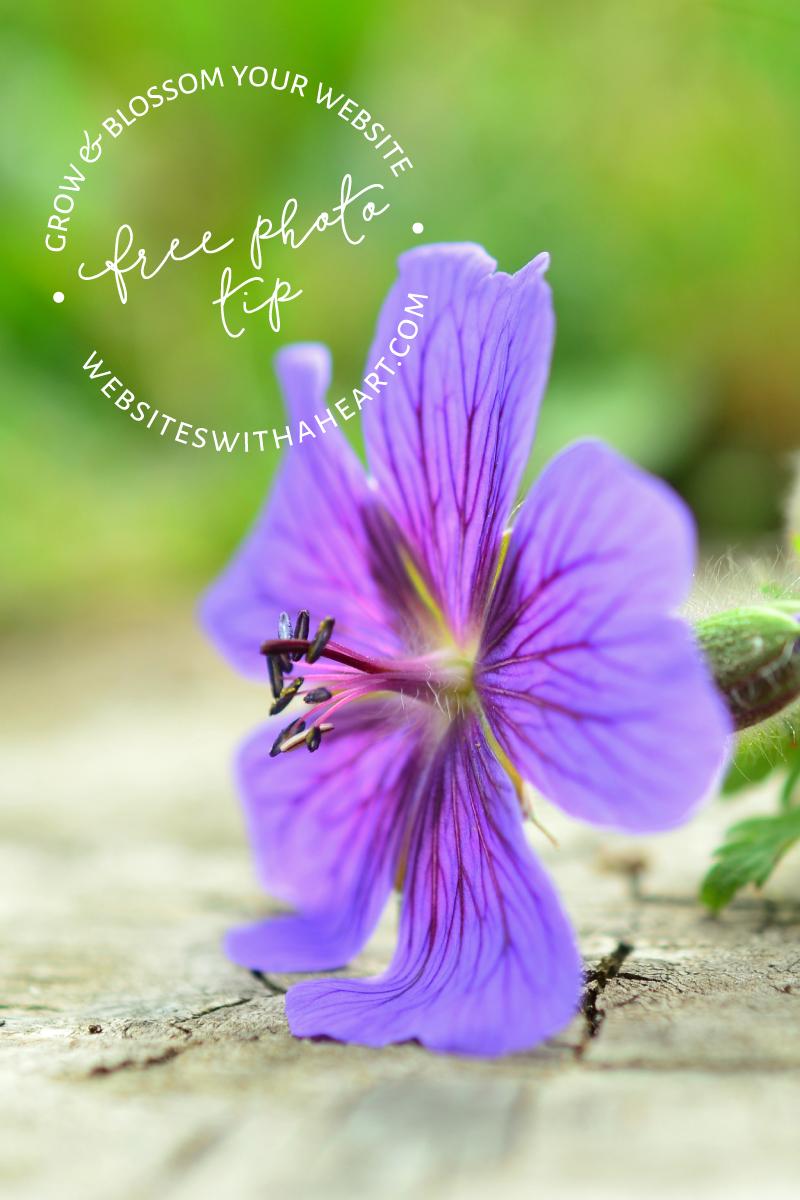 Free-Image - Bright Blue Cranesbill flower