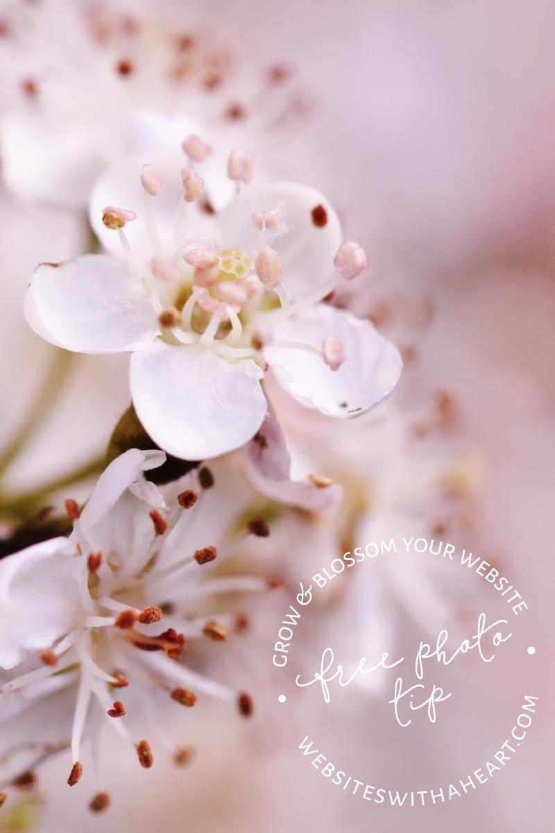 Free Image - Pastel-Blossom