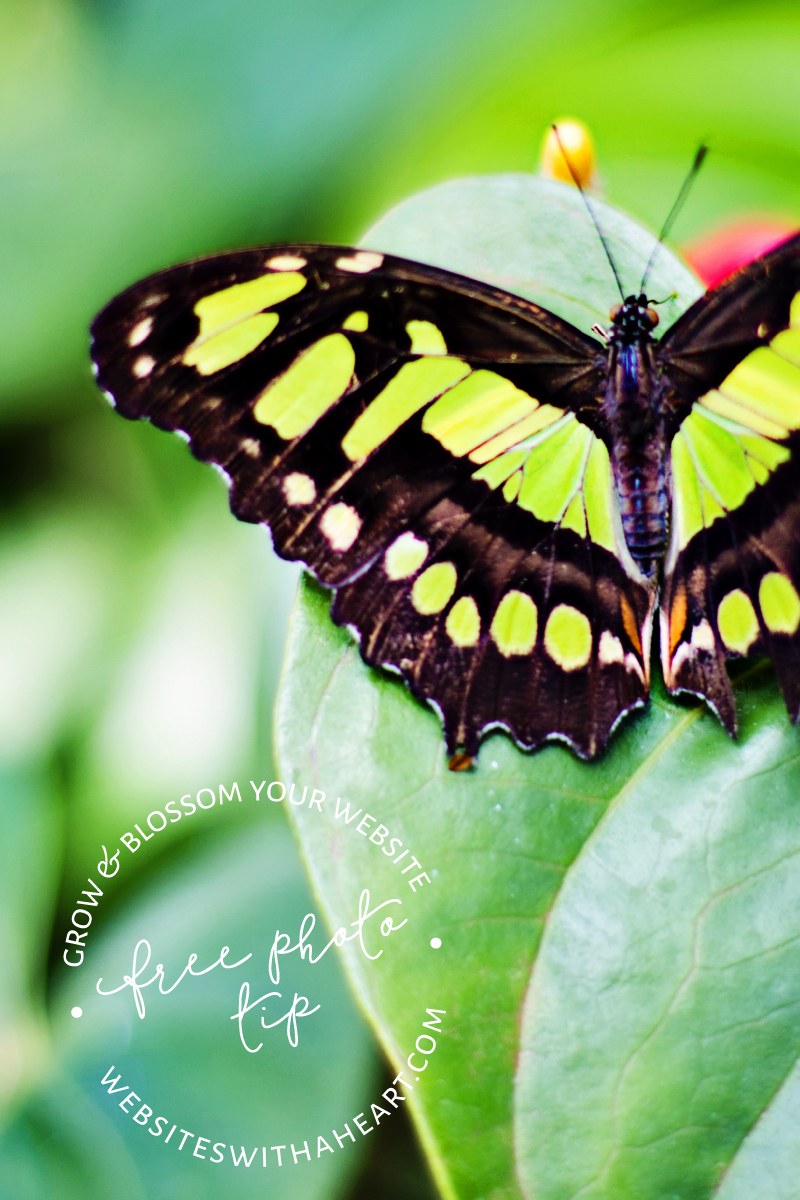 Free image - vivid green butterfly