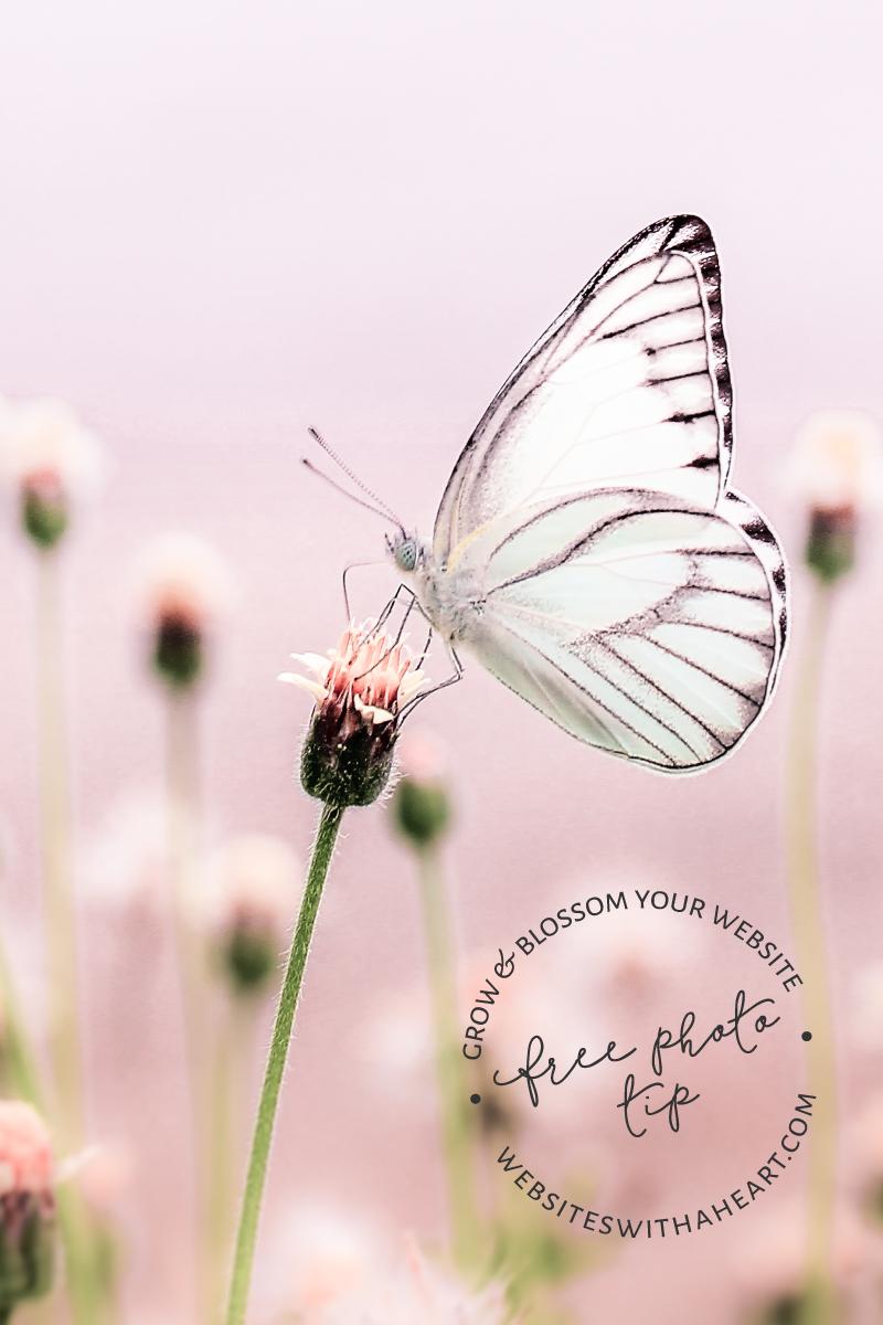 Free Stock Image tip Pastel Butterflies