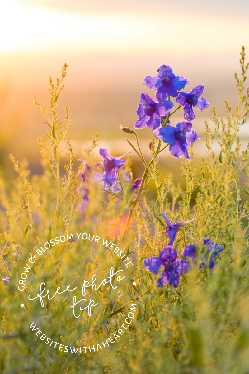 Free image Dreamy sunset with Blue flowers