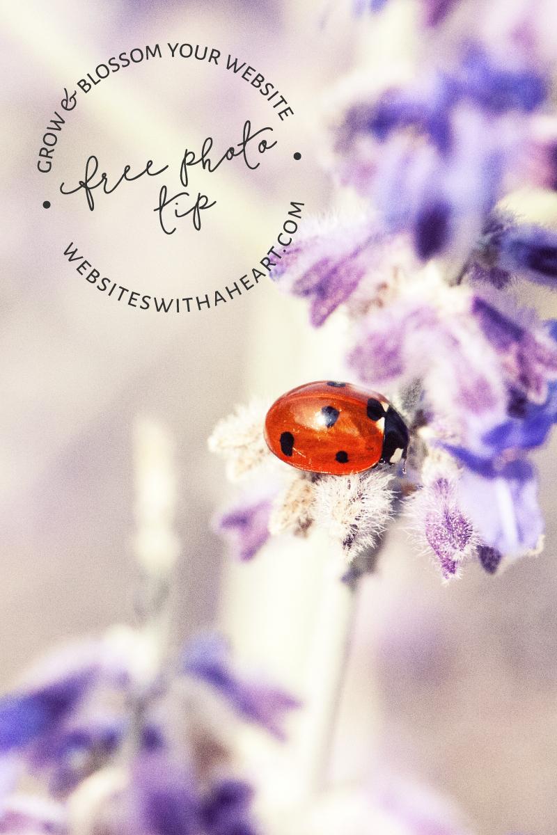 free image tip - ladybug - lavender