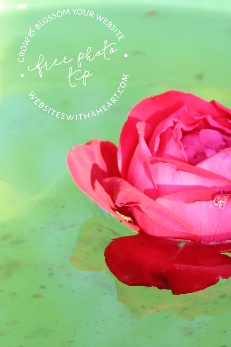 free image tip of a floating rose