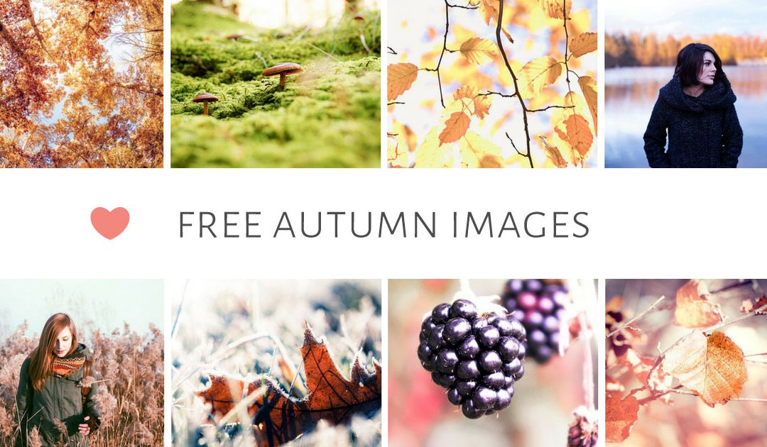 Free Stylish Autumn images for blog & social media posts