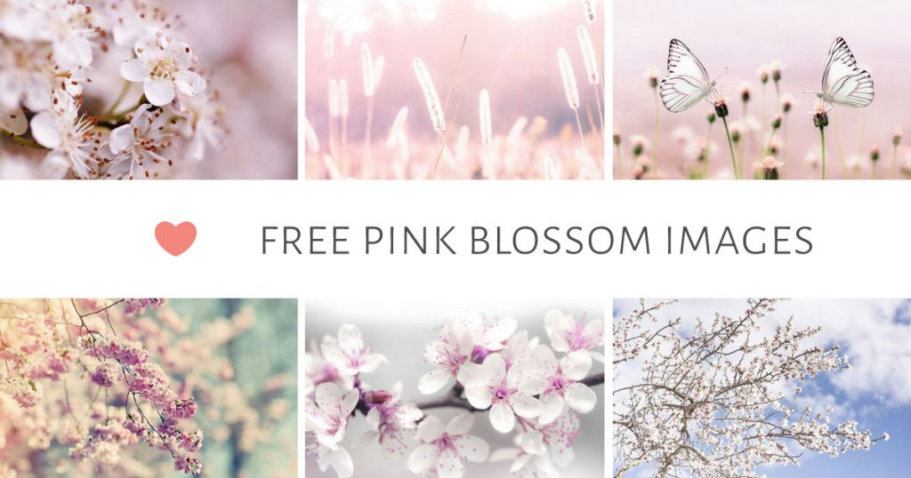 Free Pink Blossom Images